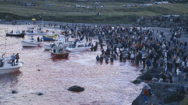 Caza de ballenas en Islas Feroe.