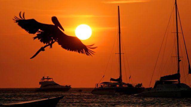 Un ave sobre el atardecer