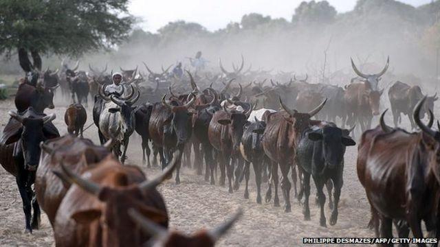 Herdsmen for Chad
