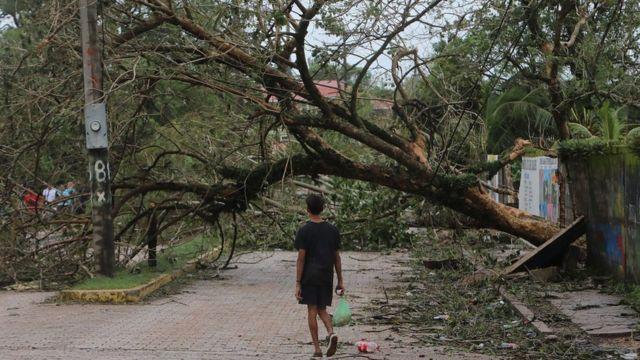 Árbol caído en Puerto Cabezas