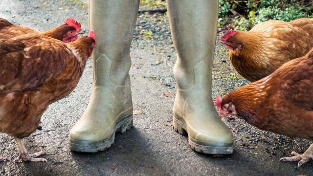 Botas junto a gallinas