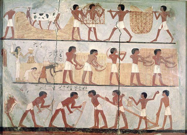 الحصاد في مصر القديمة