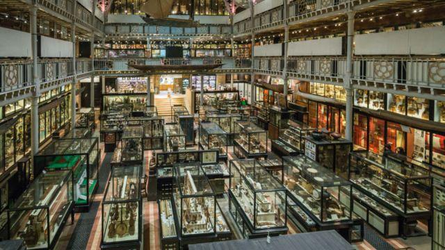 Área de exibição do museu Pitt Rivers
