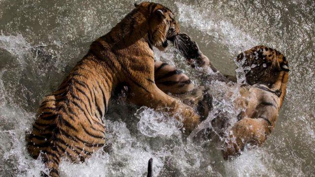 По сравнению со многими животными человек очень слаб физически