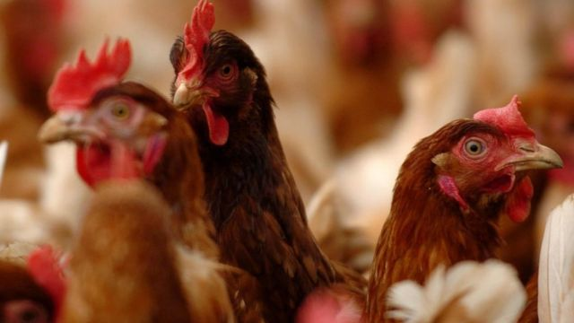 Snowdonia chicken farm backed after noise and smell assurances