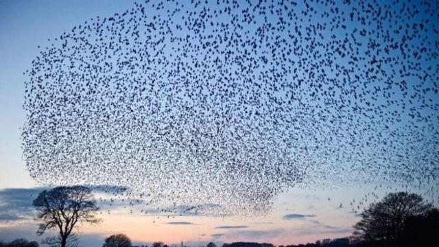 大量廉价小型无人机组成及机群像鸟那样空中协调