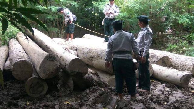 ၂၀၀၁ ခုနှစ်မှ ၂၀၁၇ခုနှစ်အထိ သစ်တောဧက ၇သန်းခွဲလောက်ဆုံးရှုံးခဲ့တယ်