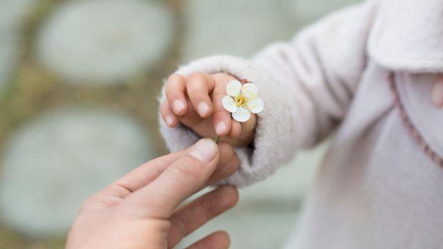 Mano de un niño dando una flor a un adulto