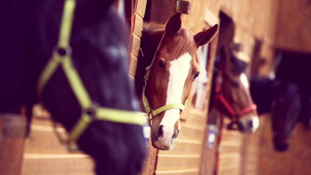 Horses can communicate with us - scientists