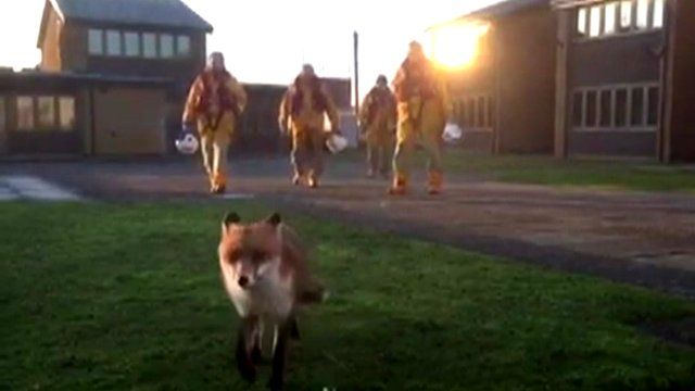 A fox has been named Basil by the crew at RNLI Spurn Point