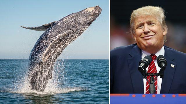 Дональд Трамп и кит