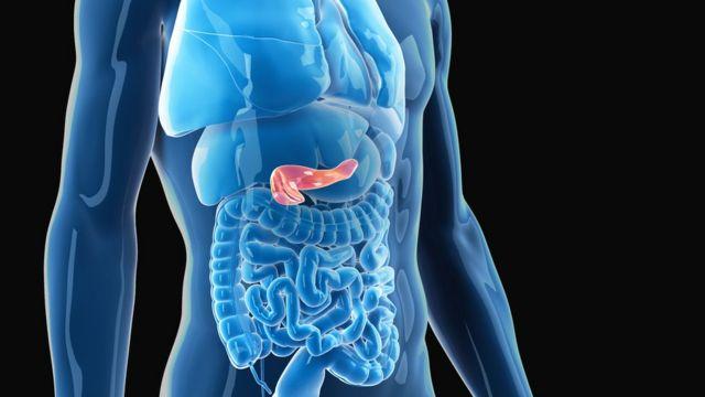 Ilustração médica do pâncreas