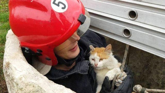Врятований кіт