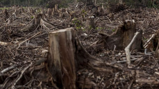Deforestation rate for Indonesia dey among one of di Highest for di world.