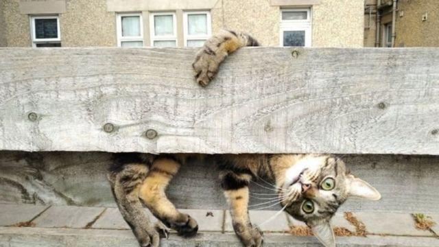 Tahta bir kütüğün arkasına saklanmış kedi.