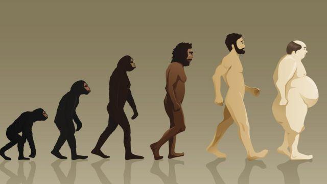 evolución y obesidad