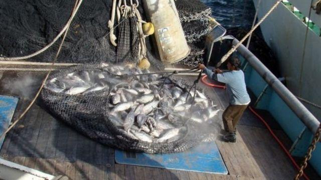 يتتبع نظام مراقبة الصيد العالمي سفن الصيد في شتى أنحاء العالم