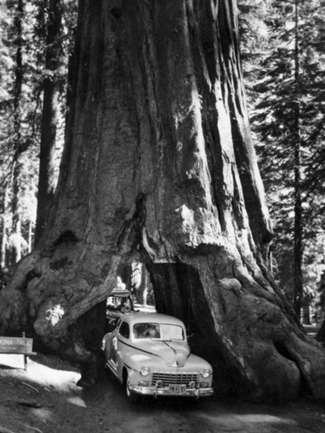 Imagen de archivo de 1955