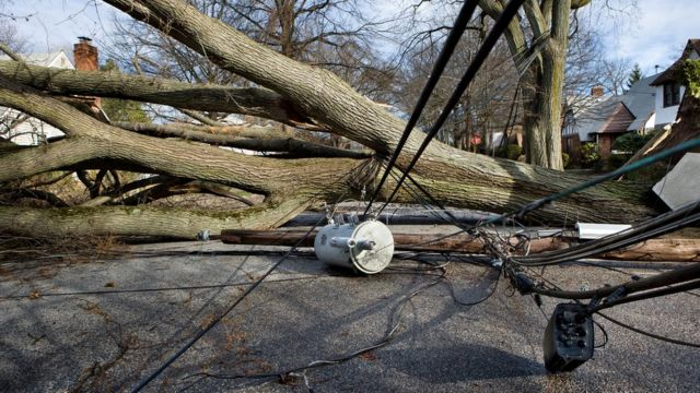 Одно упавшее дерево может спровоцировать энергетический кризис в целой стране