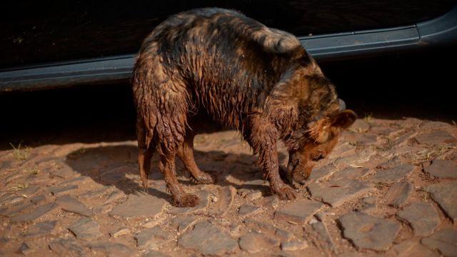 A cadela Nilza, de Geraldo e Vanda, foi resgatada pelos Bombeiros cheia de lama e está abrigada por uma família