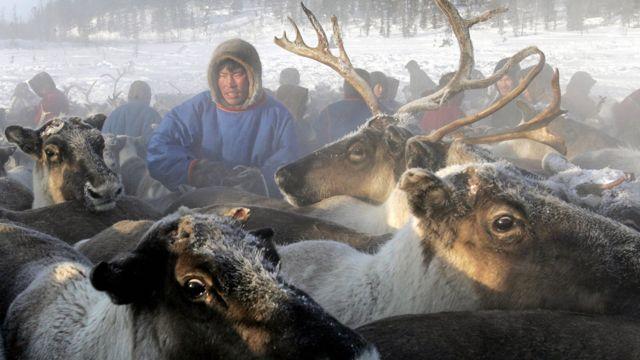 Pastor nómada con renos en Siberia