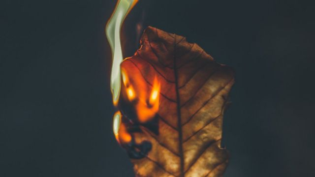 Сжигание листьев приводит к загрязнению воздуха, воды и почвы