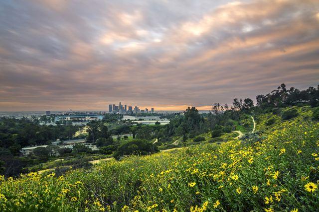 City Flowers by Brandon Yoshizawa