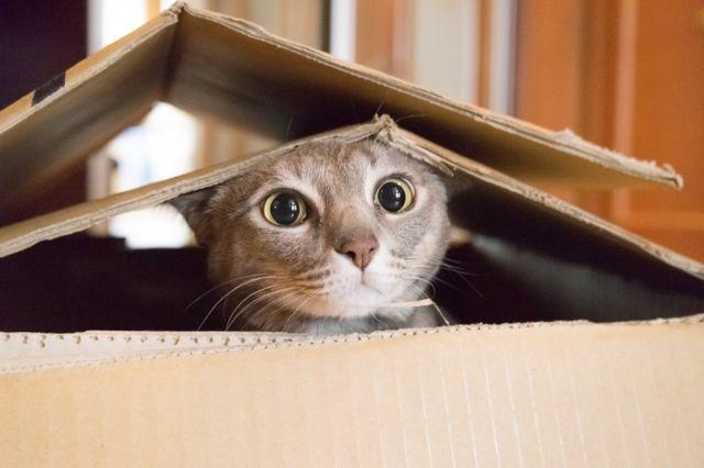 mačka u kartonskoj kutiji