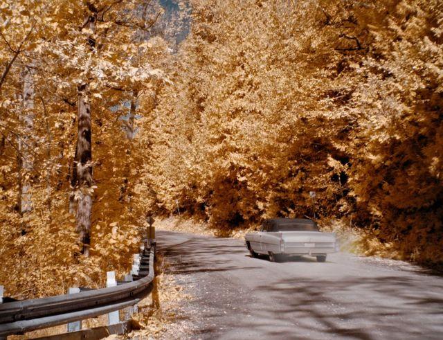 A car driving through autumnal trees