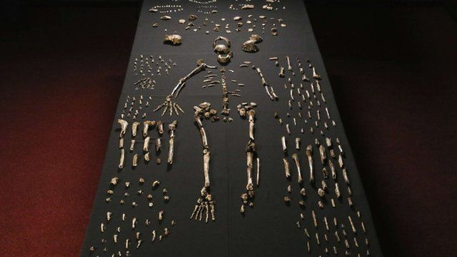 The bones uncovered in the cave were reassembled to form the outline of an ancient skeleton