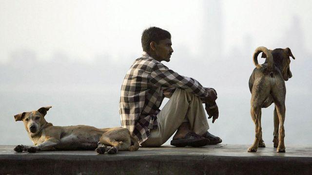 Perros y habitante