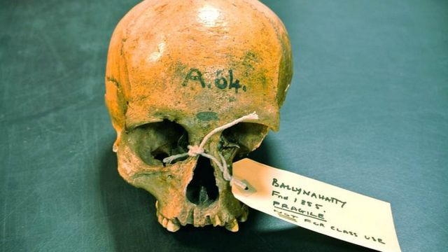 Ancient DNA sheds light on Irish origins