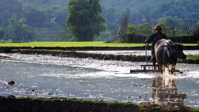 """LS Ngô Ngọc Trai: """"Nhiều ban ngành có quan điểm coi trọng giữ gìn đất nông nghiệp."""""""