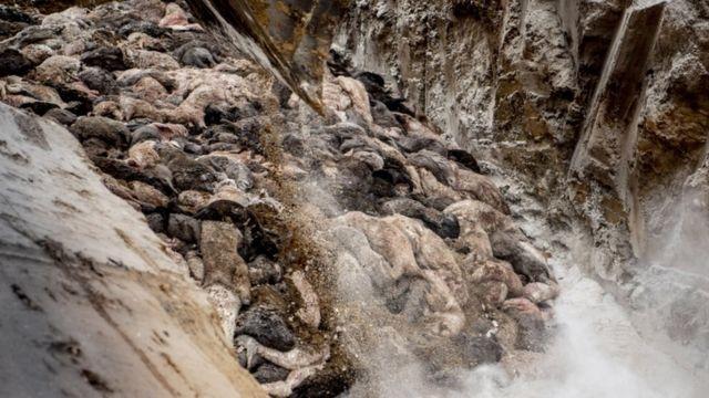 أكوام من جثث حيوانات المنك في أحد مواقع الدفن