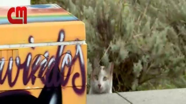 çamaşır makinesinin yanında bir kedi