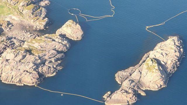 Balinalar deneyler için bu tür bir alana sıkıştırılıyor
