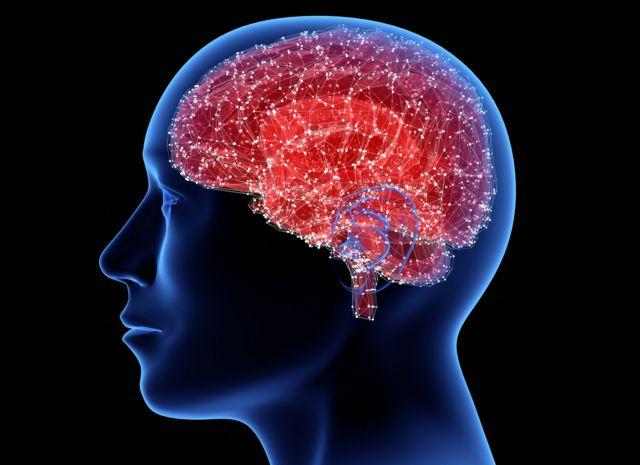 En qué otros lugares de nuestro cuerpo tenemos neuronas (además del cerebro)  y para qué sirven - BBC News Mundo