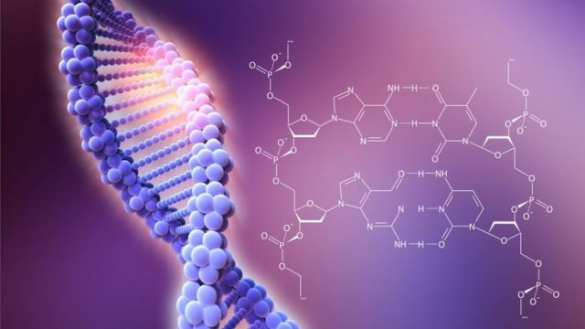 Descripción del ADN y su estructura.