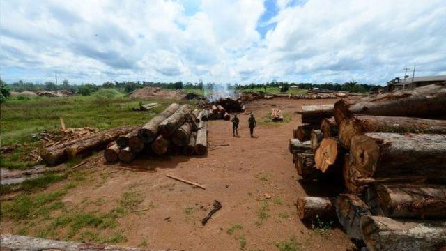 Madeira desmatada ilegalmente da Amazônia