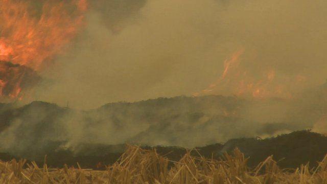 Crop-burning near Delhi