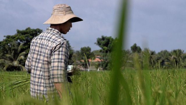 Phan Thi Hang, a farmer in Vietnam's Ben Tre province