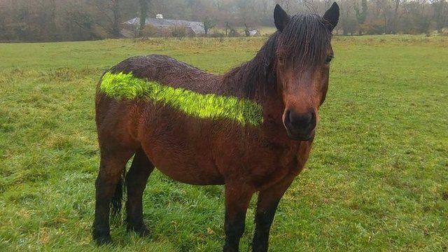 Reflective paint on pony