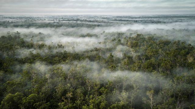 Floresta na Indonésia vista do céu, com árvores entremeadas por nuvens