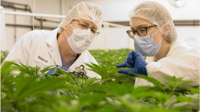 Ex-big pharma executive behind OxyContin sells medical marijuana