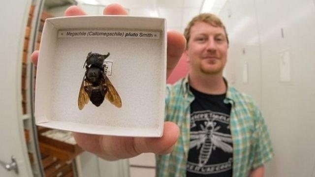 Eli Wyman ve arı