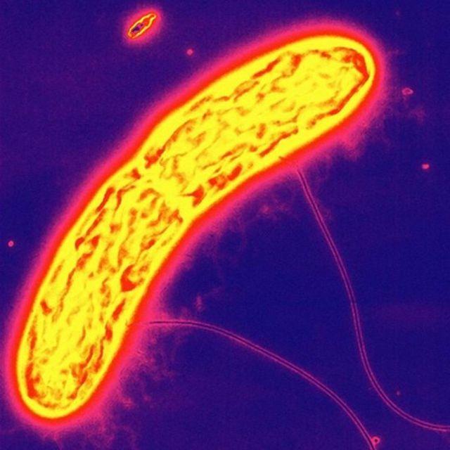 Geobacter metallireducens
