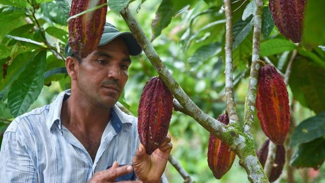 Cacao y chocolate, ambas palabras proceden del náhuatl.