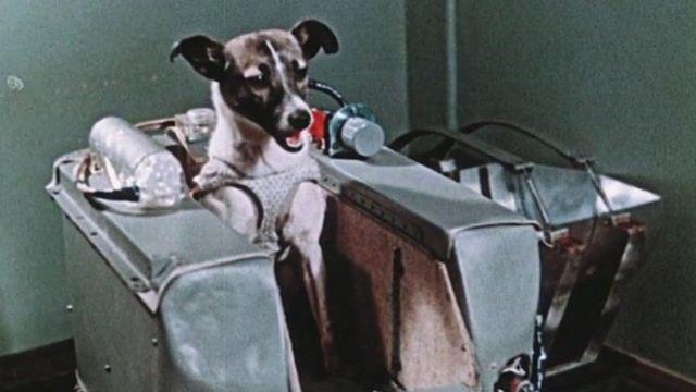 "La increíble odisea de Laika, la perrita ""pionera"" enviada a morir al espacio - BBC News Mundo"