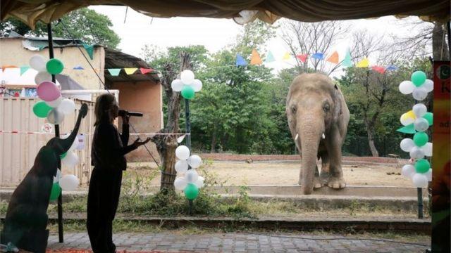 اسلام آباد کے پیارے ہاتھی کاون کو خدا حافظ!