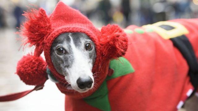 Un perro vestido de elfo en Glasgow